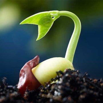 Увеличьте свои продажи, сотрудничая с лучшим интернет магазином семян