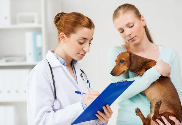 Лечебный корм для собак: что это